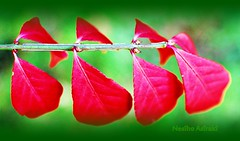 love of green and red (NESIHO) Tags: life red usa color green fall love nature yellow mi october flickr day joy lansing fave yesil kurdish kirmizi nesiho