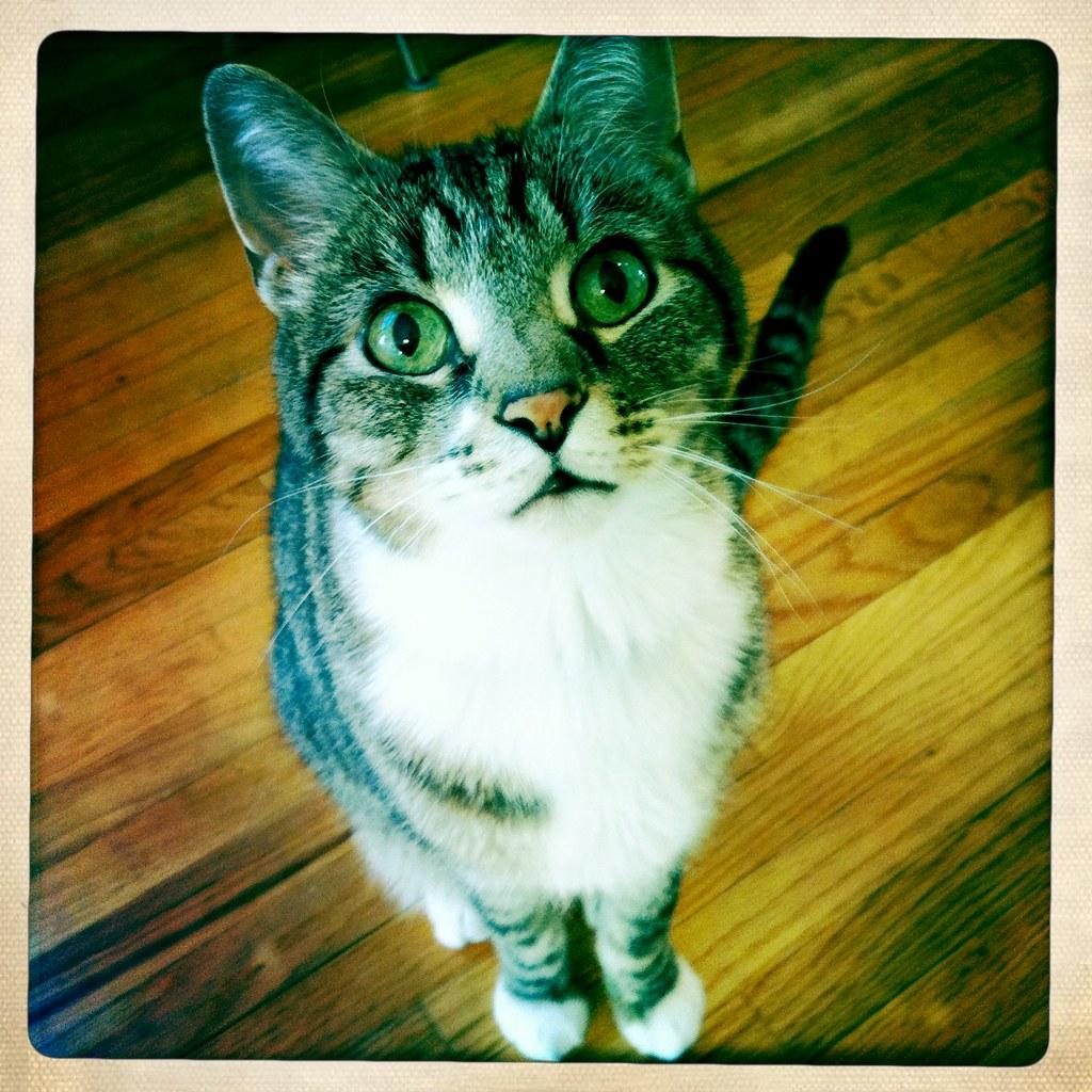 Cat No. 1 of 3: Cochka