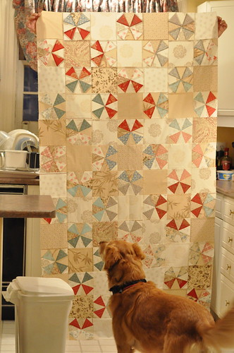 half a kaleido quilt top plus dog