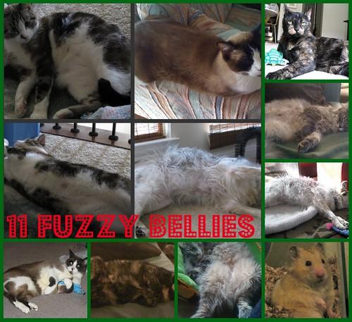 11fuzzybellies