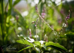 Spring Splendor ::|Explore|:: (Saleh Alnemari) Tags: green canon bee 5d mark2   taif elites 4070 markll ios100    salehnemari