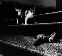 Street Photography (Kale Crane) Tags: cats eye contrast cat dark movement musical spy marble aristo