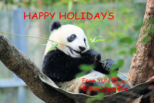 HAPPY HOLIDAYS from YUN ZI