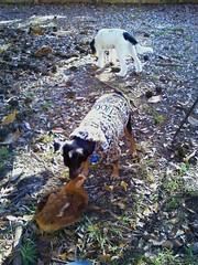 dog chicken puppy georgia spike dexter eastpoint
