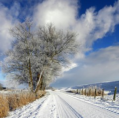 Tree & Skyfire (Ger Bosma) Tags: winter white snow tree clouds spectacular landscape cloudscape friesland wintersky gettyimages winterwonderland lauwersmeer