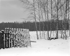 A winter scene with a fence. (wojszyca) Tags: mamiya rz67 6x7 mediumformat 110mm efke 25 standdevelopment rodinal r09 1200 2h fence winter snow cold trees gossen lunaprosbc canon canoscan 9000f poland