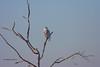 Snowy Owl (Eddy Matuod) Tags: wild canada canon eos snowy d country creative experiment explore alberta handheld moment owls widlife iamcanadian 1dmkiin 14xtc creativemoment abigfave 600f4 avianexcellence goldstaraward