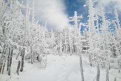 White Trees of Kitayatsugatake (peaceful-jp-scenery) Tags: winter snow landscape snowshoe snowshoeing     kitayatsugatake
