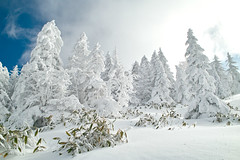 Frost Covered Trees (peaceful-jp-scenery) Tags: winter white snow japan landscape snowshoe snowshoeing        kitayatsugatake