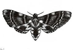 Death's Head Moth (amouse) Tags: art head drawing dr moth silence diagram lambs hannibal deaths lector of