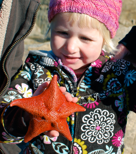 m & starfish-1113
