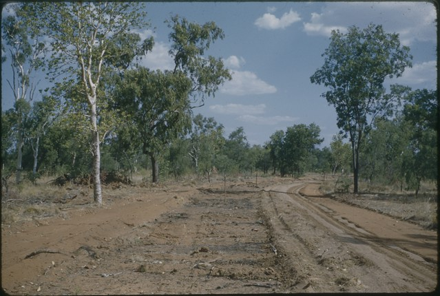 Marking out Coolibah Drive November 1959 - Cyril Ion Collection KHS Digital Archive Number KHS 2010-2-048-au-PD