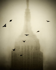 Empire State Building (noamgalai) Tags: nyc ny newyork building monochrome birds skyscraper landscape view pigeon esb empirestatebuilding noamgalai sitelandscapes sitemisc