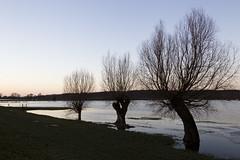 Het water komt... (webted) Tags: sunset water river zonsondergang overstroming rivier hoogwater randwijk nederrijn dooi waterhoogte