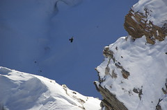 (andres_colmen) Tags: snow alps bird alpes switzerland suiza nieve ave gornergrat cañón
