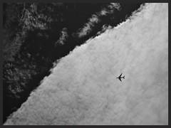 Flight (Zelda Wynn) Tags: sky bw cloud art nature weather skyscape heaven diagonal auckland artgalleryofnsw equivalent cloudscape altocumulus troposphere zeldawynn inspiredbyalfredstieglitzartgalleryofnewsouthwales