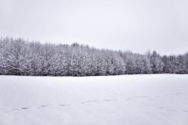 skogsdunge