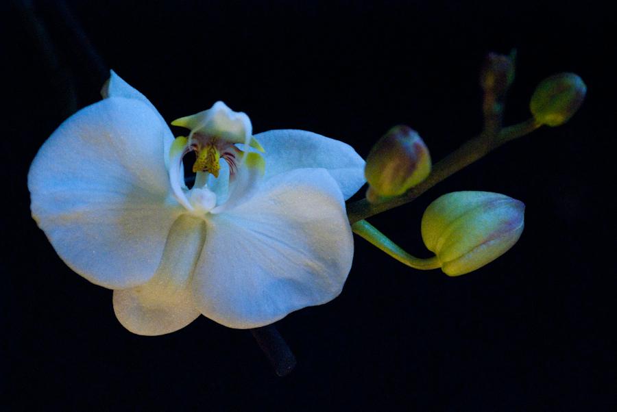 beautiful white tones   DSC_1441