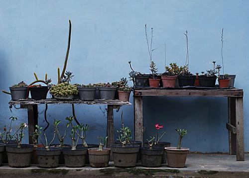 garden (36/365 dps)