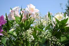 DSC_0352 (Bryony_) Tags: flowers