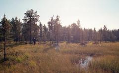 (KXing) Tags: lappi lappland finland scandinavia outdoors film 35mm nikonf3 nikon nikkor nature landscape luonto syksy autumn hiking trekking vaellus erä