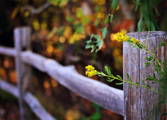 Fence at Oak Mountain {Explored} (eRachel11) Tags: wood fall fence nikon dof bokeh alabama fences woodenfence hff oakmountainstatepark d7000 nikond7000 happyfencefriday