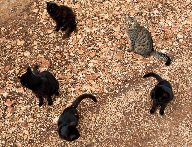 Kas Cats