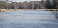 IJs op 't Leersumse Veld (webted) Tags: bevroren ijs schaatsen leersumseveld ijsvlakte schaatsseizoen