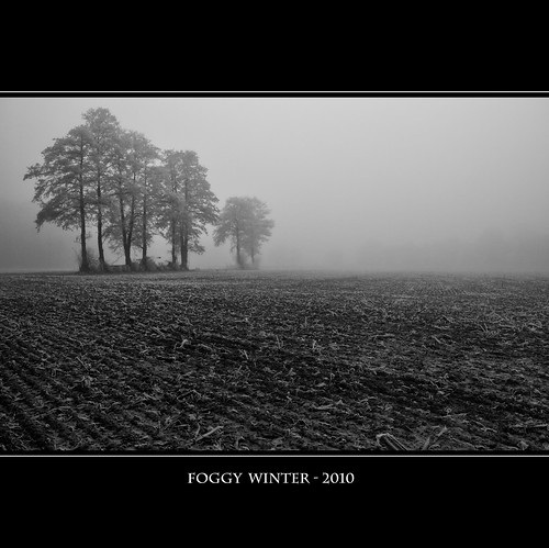 FOGGY WINTER - 2010
