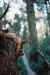trees and light (urnama) Tags: wood light tree film nature analog bokeh pentaxz10 pellicola