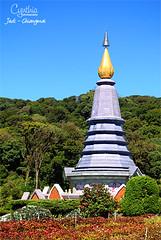 Jedi - Chiangmai (1)