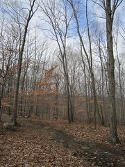 Tourne County Park - Red Trail Photo