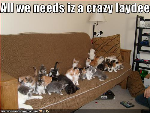 funny-pictures-tons-of-cats-wait-for-their-crazy-lady