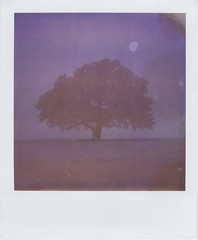 Winter Tree 1 (Lizzie Staley) Tags: winter snow tree film catchycolors dark polaroid sx70 frost purple 600 expired cmwdpurple
