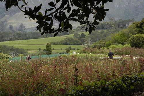 Chart Farm, Cape Town