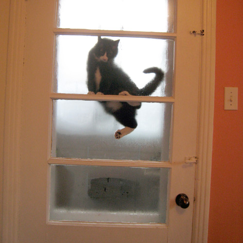 Chat grimpé sur la porte de la véranda