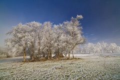 Hoar frost (antonyspencer) Tags: uk trees winter mist fog landscape frost vale dorset hoar fishponds naturepoetry marshwood