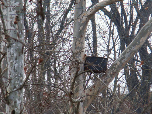empty GHOW nest