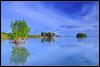 Reflections 1 (peakdot) Tags: landscape pcc 1116 pinoykodakero ycap garbongbisaya
