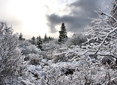 Through the Snowy Woods (Karen_Chappell) Tags: blue trees winter sky white snow canada cold clouds forest newfoundland landscape woods scenery december snowy branches scenic stjohns nfld eastcoast pippypark