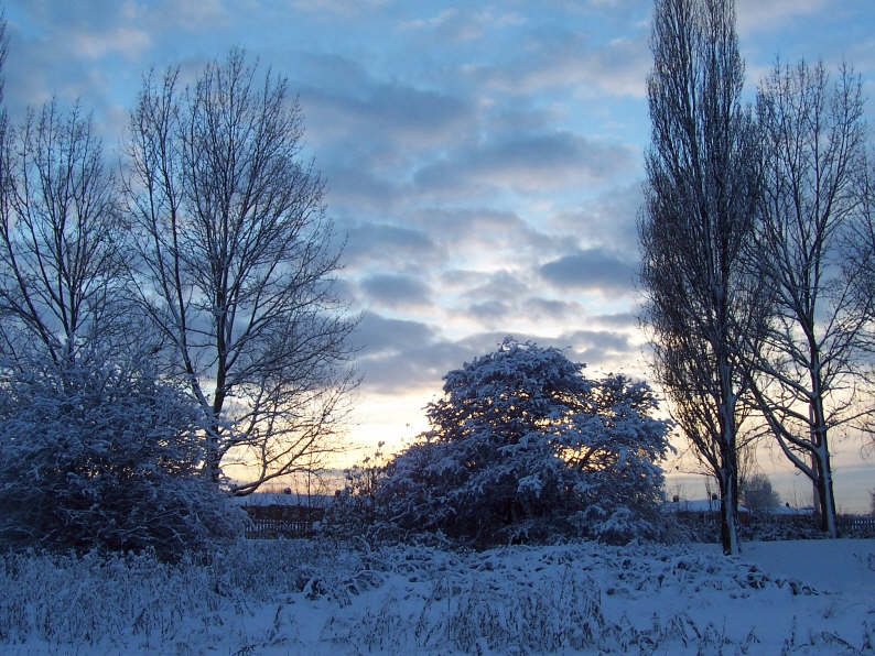 east_yorkshire_trees_in_snow_003