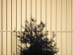 morning (xgray) Tags: morning light shadow sun color tree lines wall digital austin texas olympus ep1 featuredonadidapcom