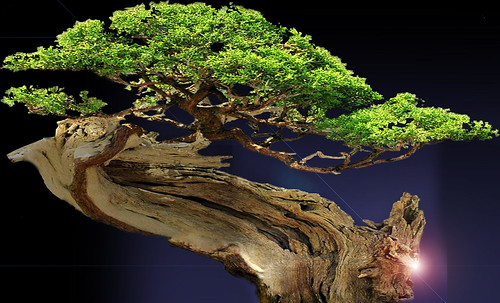 """Bonsai012 • <a style=""""font-size:0.8em;"""" href=""""http://www.flickr.com/photos/30735181@N00/5261952754/"""" target=""""_blank"""">View on Flickr</a>"""