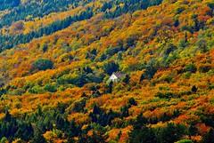 loneliness---Solitude (jd.echenard) Tags: solitude couleurs arbres forêt habitation twann seeland lacdebienne wingreis rivesdulacdebienne