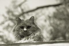 Cat on roof (jukkarothlauronen) Tags: china cat nikon dof beijing behaipark nikond3000