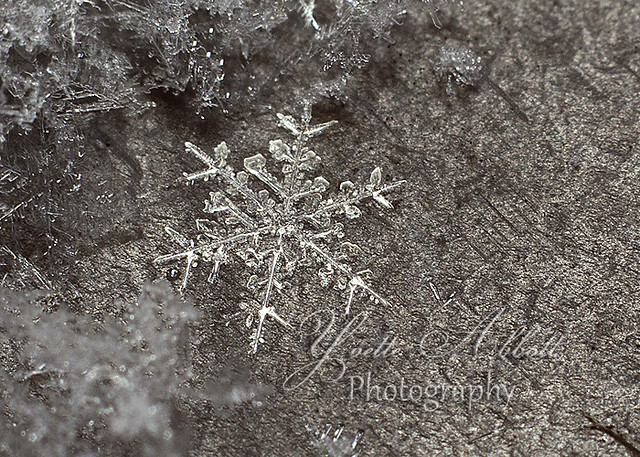 IMG_3187 snowflake