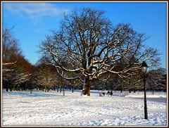 Chestnut (Frans Schmit) Tags: winter snow chestnut thehague koekamp lindeboom hofstijl fransschmit