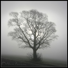 Skeletal.... (Chrisconphoto) Tags: mist cold tree freezing ethereal skeletal crank chrisconway billinge intonothing