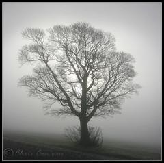 Skeletal.... (Digital Diary........) Tags: mist cold tree freezing ethereal skeletal crank chrisconway billinge intonothing