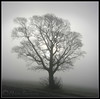 Skeletal.... (Digital Diary........) Tags: mist cold tree freezing ethereal skeletal crank chrisconway billinge intonothing
